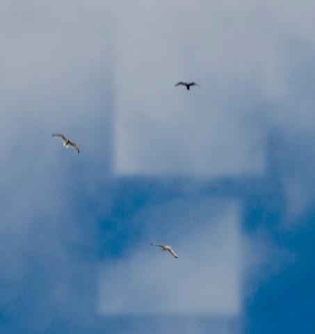 3 Eagles Disturbed?  10 pixels each