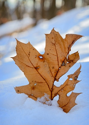 Winter Leaf  Dec 2014
