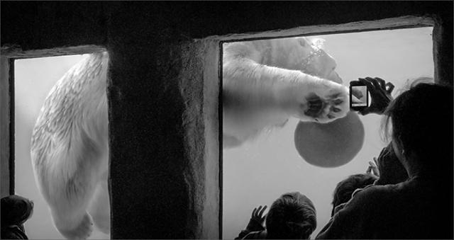 Polar Bear Games  Nov 2011