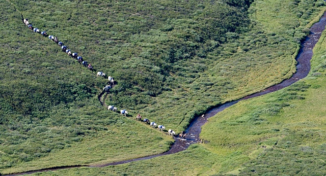 260 Pack Train at Wildhay River  Willmore 2010
