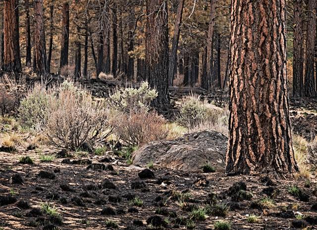 After the Fire - Big Hole Oregon