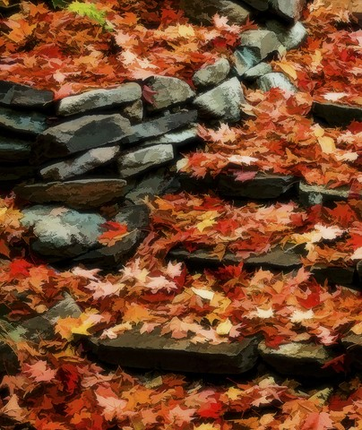 Leaves Softly Fallen  October 2012