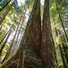Cathedral Grove  Sep 2016