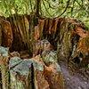 Walk-In Tree Stump  Sep 2016