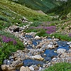 029 Stream and Flowers Willmore 2010