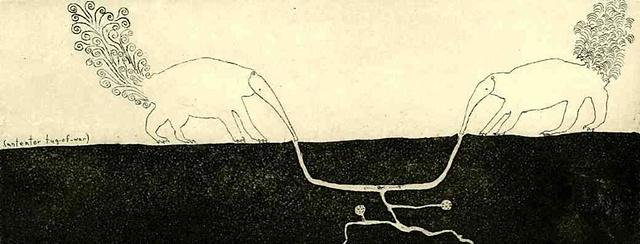 Anteater Tug-of-War