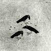 Blackbird, blackbird