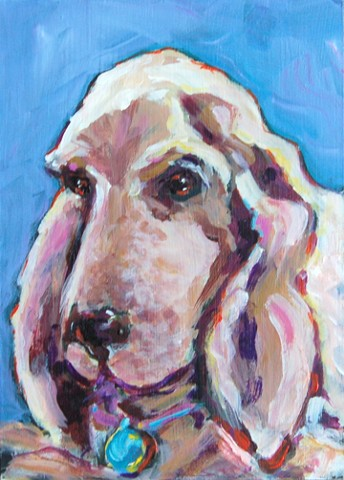 Pet portrait of Kipper, cherished family member of the Reed family.