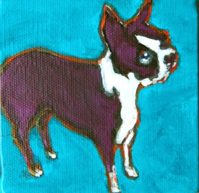 Portrait of Glock, an energetic little Boston Terrier