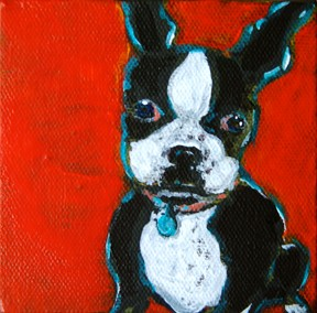 Portait of Jade, a sweet Boston Terrier
