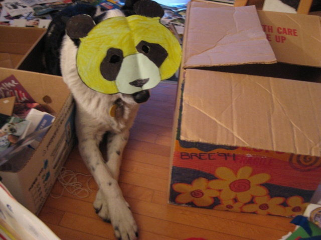 Fox Panda in Disguise as real panda camouflaged amongst household debris
