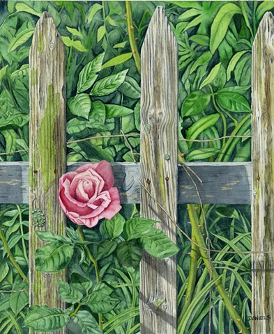 pink rose watercolor, pink rose print, pink rose through old fence, urban garden, pink rose in city alley way