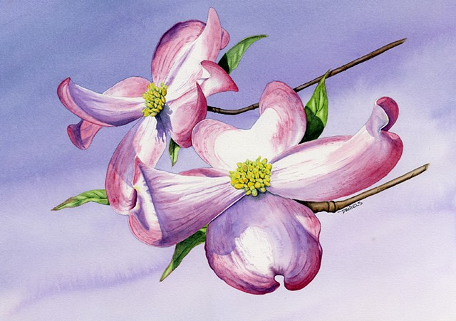 Dogwood blossoms watercolor print, spring watercolor print, pink and purple home decor