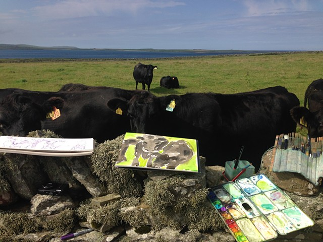 Cows on Papa Westray