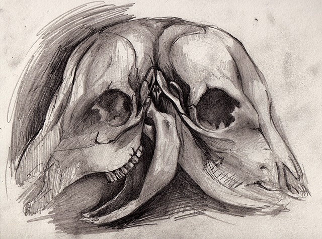 two headed cow skull