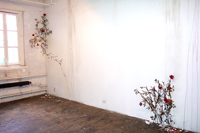 Rosebushes
