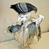 Pompeii Pigeons