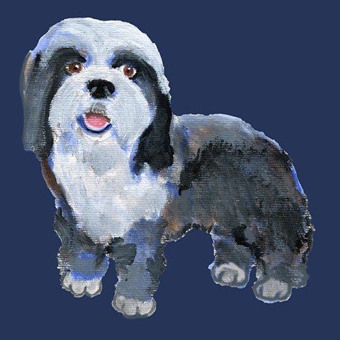 Bearded collie on navy