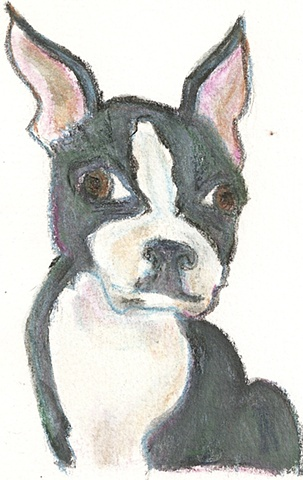 Watercolor pencil on paper depicting a french bulldong