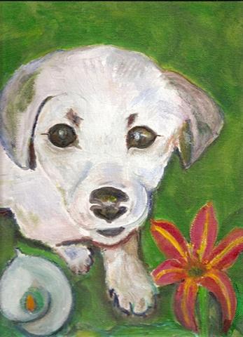 Pet Portrait : White Pup