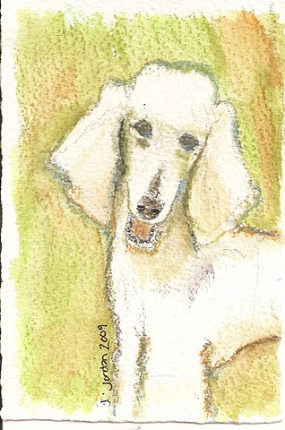 Watercolor pencil on paper depicting a poodle with a green background