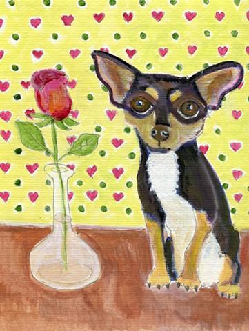 A chijuahua and a rose