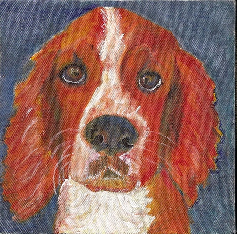 Pet Painting  of a Welsh Springer Spaniel