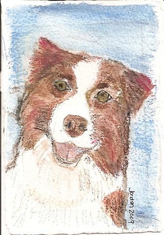 Watercolor pencil on paper depicting a red Australian Shepherd
