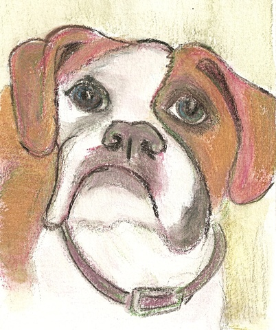 Watercolor pencil on paper depicting a Boxer