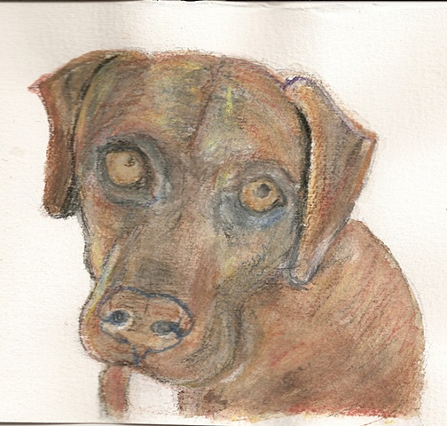 Watercolor pencil on paper depicting a brindled pitbull