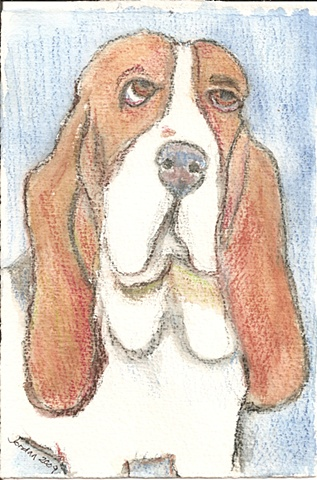 Watercolor pencil on paper depicting a Basset Hound