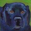 Louie in Blue