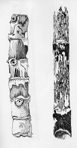 bamboo driftwood