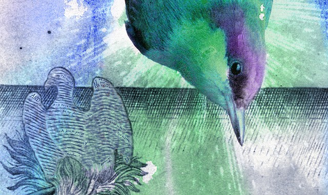 Brown-headed Nuthatch and Common Vetch (detail)