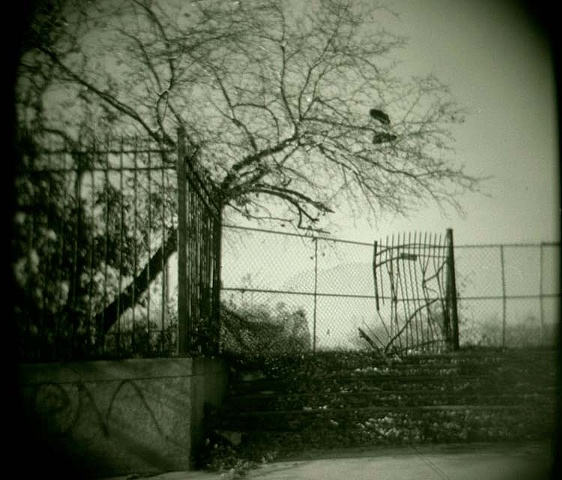 Taken with holga camera Spooky looking broken down fence and gate with laced gym shoes thrown over a tree before Home Depot was built by Lucy mueller