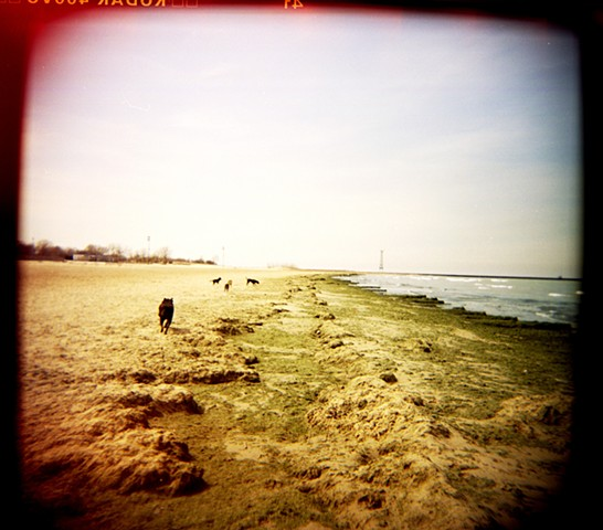 Shot using a holga camera on the apocalyptic looking dog beach at Montrose Avenue by lucy mueller