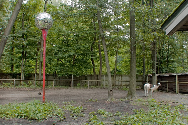 llama in a corral with a disco ballmounted on a red pole at petting zoo in Michigan photographed by Lucy mueller