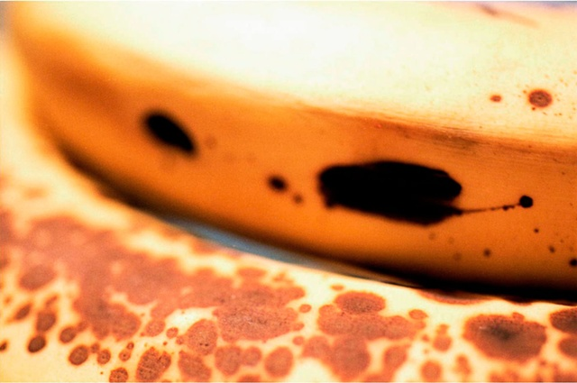 Over-ripe bananas with spots as seen close up  by Lucy mueller