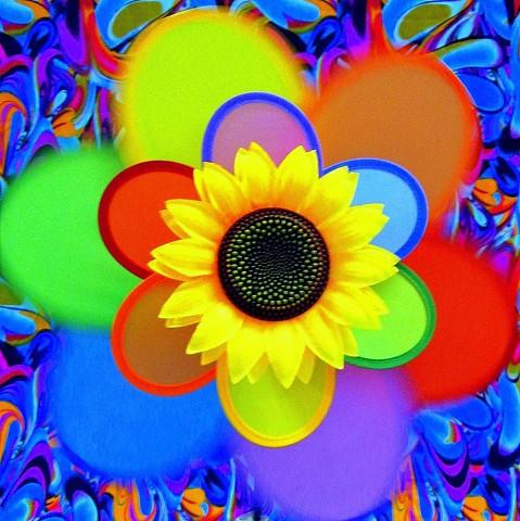 Sugar-Free Lemonade (A Summer Series-Sunflower)