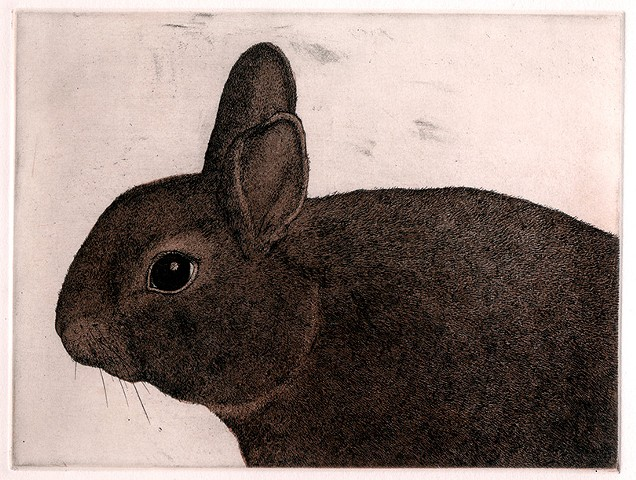 Rabbit etching and aquatint