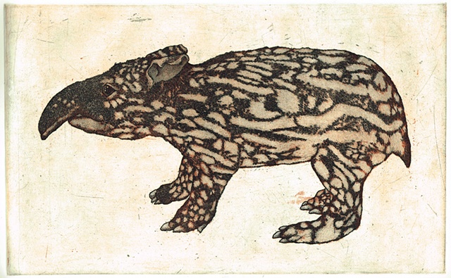 young malay tapir printmaking