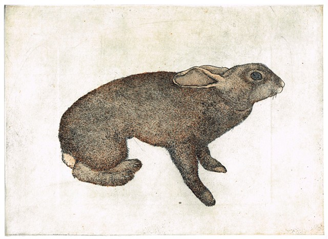 Etching and aquatint rabbit