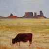 Cow, Monument Valley