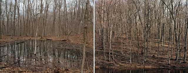 Vernal Pond & Spring Woods