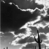 Saguaros in Silhouette