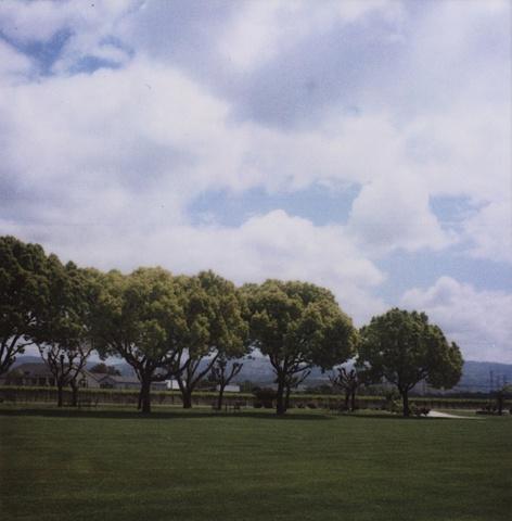 Untitled: Trees CA