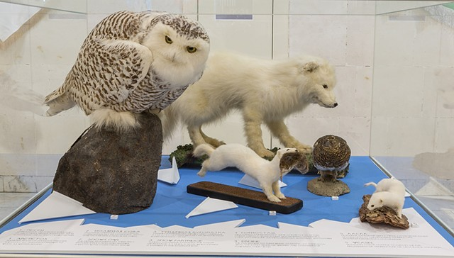 Arctic Animals