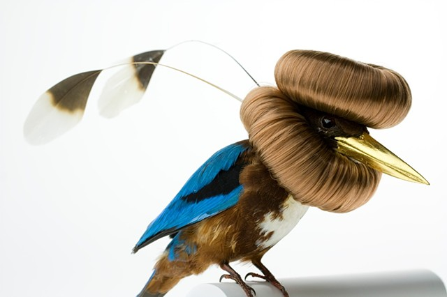 Photo of taxidermy by Karley Feaver