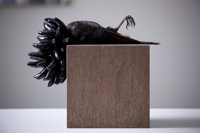 Sculpture of Taxidermy by Karley Feaver