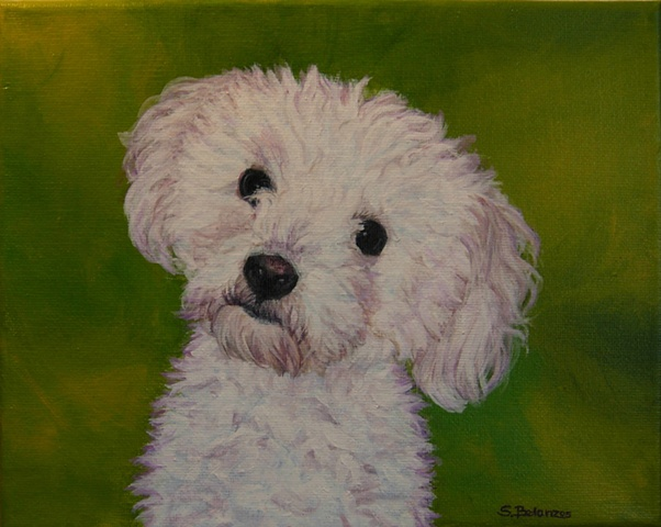 sue betanzos, dog painting, pet painting, poodle painting, pet portrait painting, poodle, contemporary dog painting, bichon frise painting, pet memorial painting
